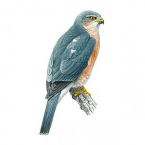 Sparrowhawk - 2nd hole